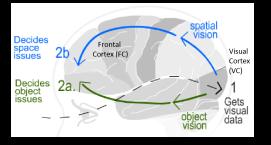 Kosslyns dual brain -2